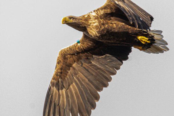 Larick Campsite - Nature Lovers - Sea Eagle