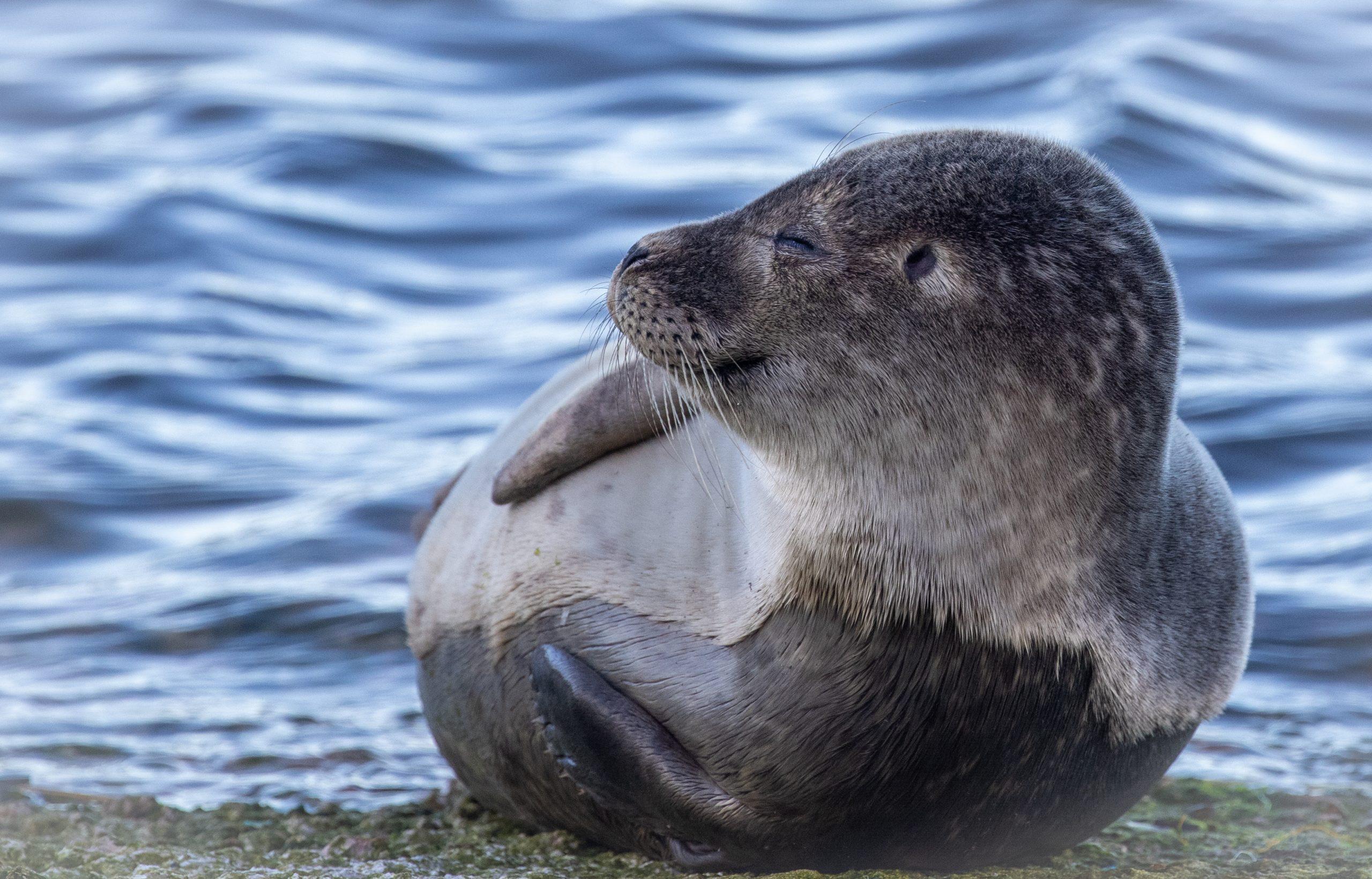 Larick Campsite - Nature Lovers - Seal pup