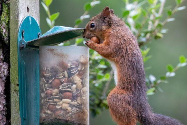 Larick Campsite - Nature Lovers - Squirrel 3