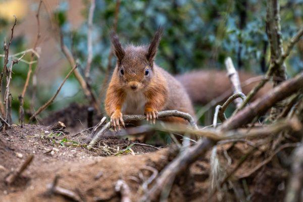 Larick Campsite - Nature Lovers - Squirrel 4